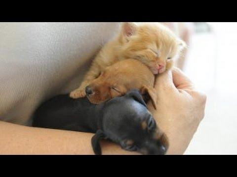 Du nouveau pour la vente des chiens et des chats