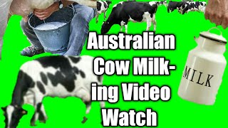 Cow Milking Full Video,Dhaka