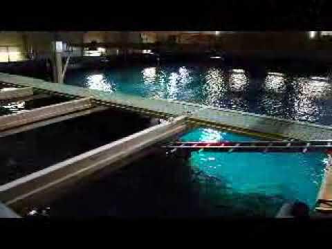 "Oceanium Diergaarde Blijdorp ""Behind The Scene""  (light version)"