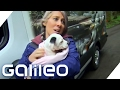 Das luxuriöseste Tierheim der Welt | Galileo | ProSieben