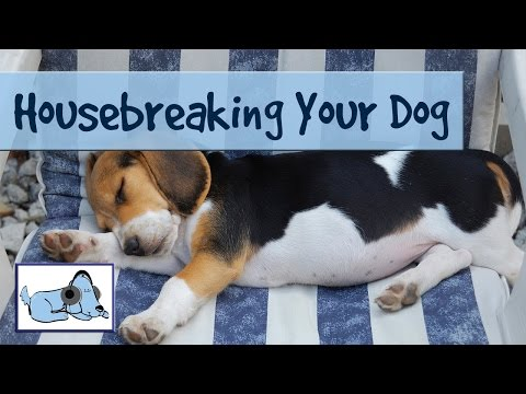 dog-vlog---potty-training-your-dog---the-easy-way-to-housebreak-your-puppy!