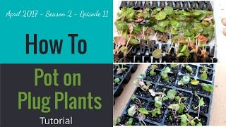 spare time gardening with simon how to pot on plug plants with 100 success apr 17 s2 e11