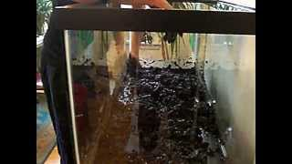 Setting Up My 75 Gallon Aquarium With An Organic Dirt Substrate