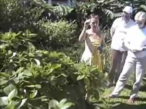 Tahiti: A tour around the island
