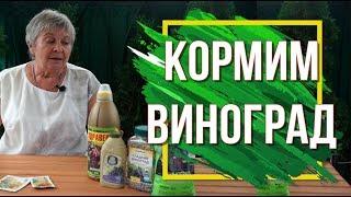 Подкормите Виноград Калием ✔️ 100% Урожай Винограда 🍇 Советы От Garden- zoo