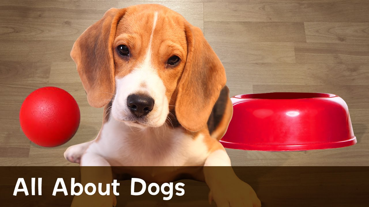 All About Dogs - YouTube