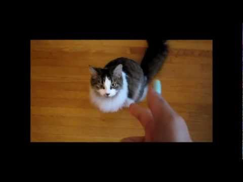 Cute Cat Does Trick