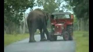 Elephant at Mudumalai