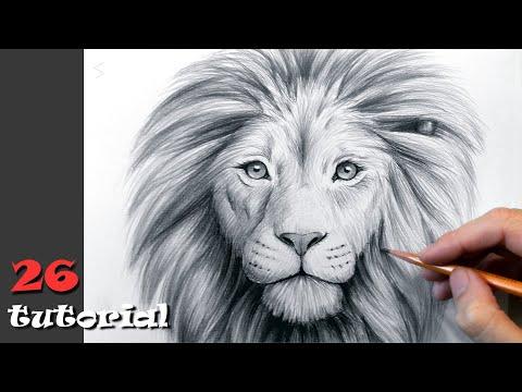 Как нарисовать льва видео