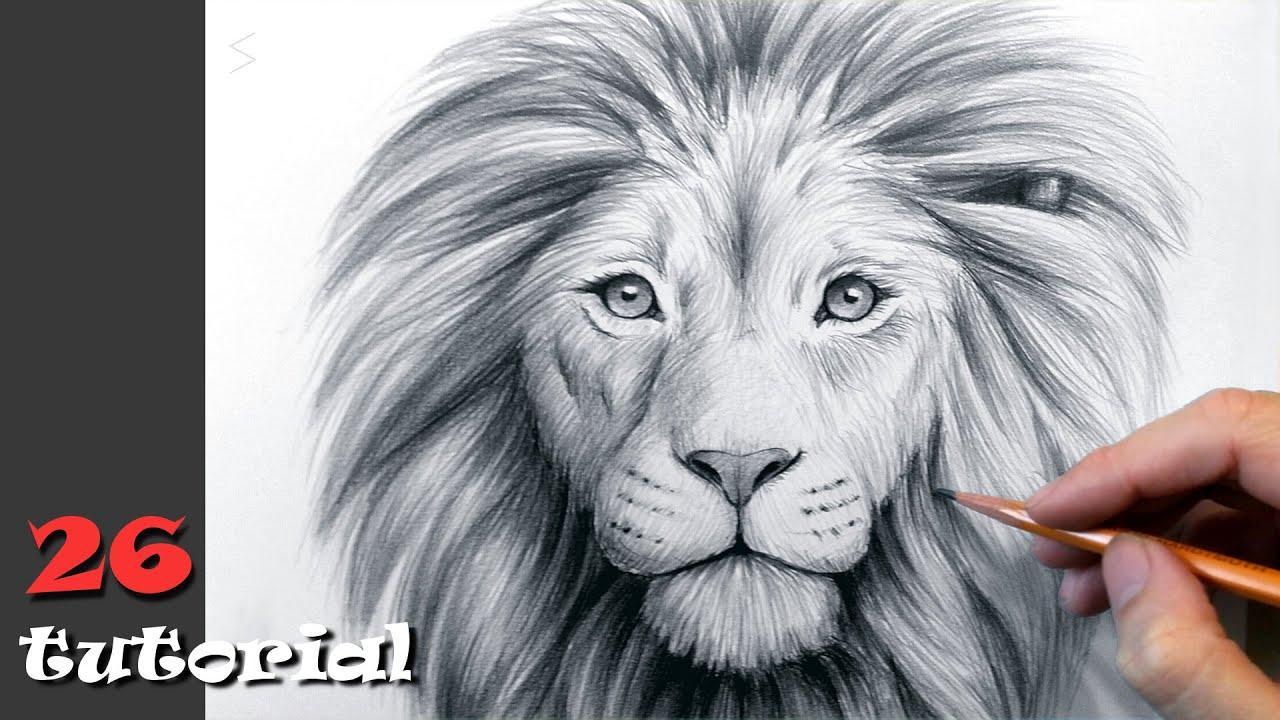 Как нарисовать льва карандашом. Поэтапный туториал. - YouTube