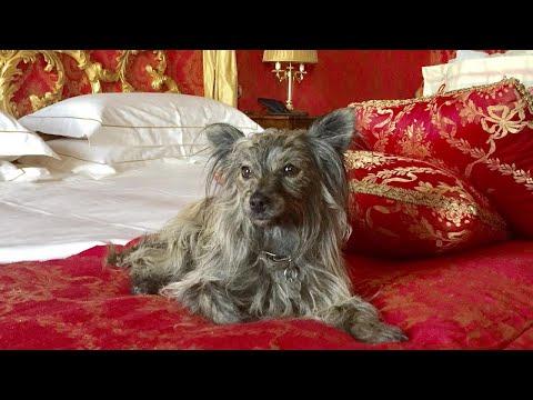 Abandoned Dog Lives Life Of Luxury