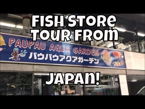 Japanese Fish Store Tour PauPau Ginza Japanese Fish Shop tour in Tour in Japan ADA Store