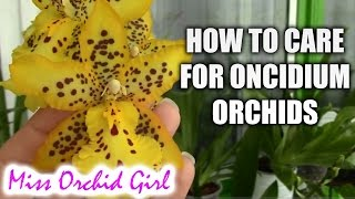 How to care for Oncidium Orchids and Intergenerics - watering, fertilizing, reblooming