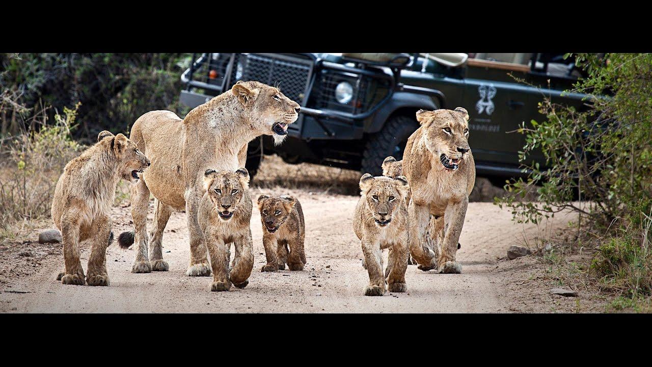 Londolozi Game Reserve - Das Original - Safari-Urlaub in ...
