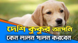 দেশি কুকুর আপনি কেন লালন পালন করবেন? Why do you cherish dogs? কুকুর আপনার বন্ধু || Odvut Bangla TV