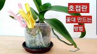 호접란 베란다에서 꽃대 만드는 방법, 빨래집게로 막아주…