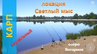 Русская рыбалка 4 озеро Янтарное Зеркальный карп с мыса