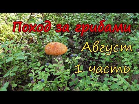 фото рыжик гриб