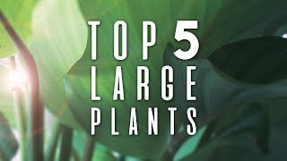 Top 5 LARGE Houseplants! | November 2018