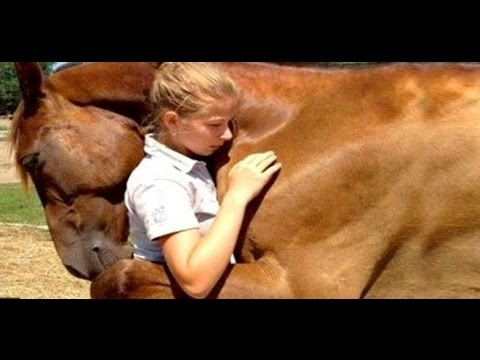 Top 10 Animals That Saved Lives||animals that save human lives