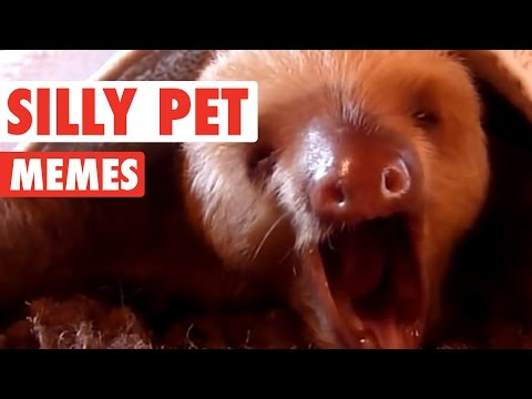 Silly Pet Meme Video Compilation 2016