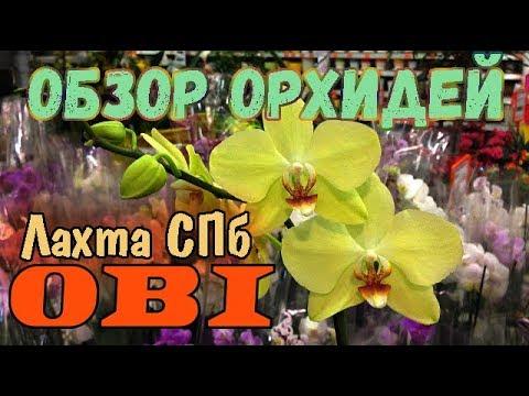 ОБЗОР | ОРХИДЕИ в ОБИ Лахта | Петербург. 12/02/19. Orchids OBI St. Petersburg