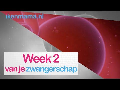 2 Weken Zwanger? Bekijk Eerste Symptomen En Meer Informatie Over Je Baby |   Ikenmama.nl