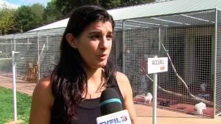 SPA : les refuges sont saturés