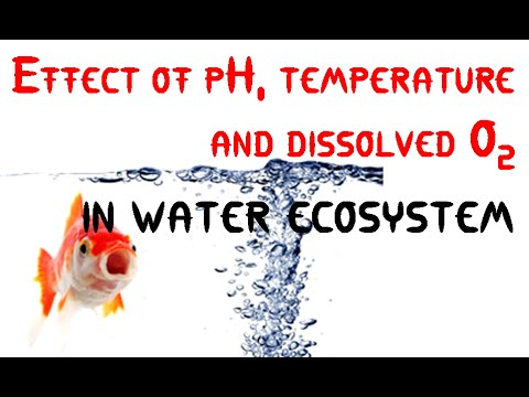 Effect Of PH Temperature And Dissolved O2 In Water Ecosystem