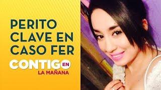 Procedimiento clave: Perito de caso Frei investiga caso de Fernanda Maciel - Contigo en La Mañana