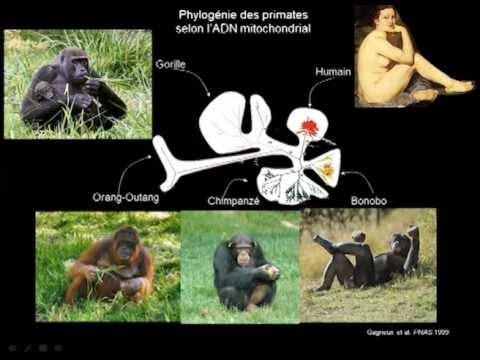 2/3 Le processus de l'évolution biologique : Sélection naturelle, de Darwin à la génomique évolutive