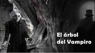 Leyenda Mexicana: El Arbol Del Vampiro