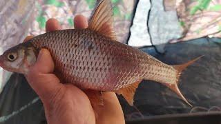 Рыбалка на Кременчугском водохранилище или как палатка может испортить настроение