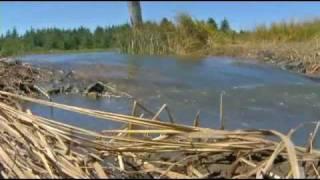 Bandon Marsh National Wildlife Refuge - Marsh Restoration