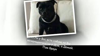 Друг собаки - это звучит гордо !