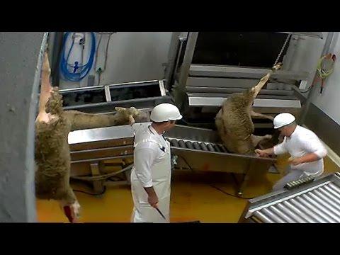 Abattoir made in France - certifié bio - Le Vigan