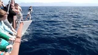 Catamaran Dolphin Tour Supercat Puerto Rico Gran Canaria