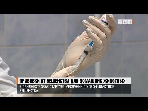Прививки от бешенства для домашних животных