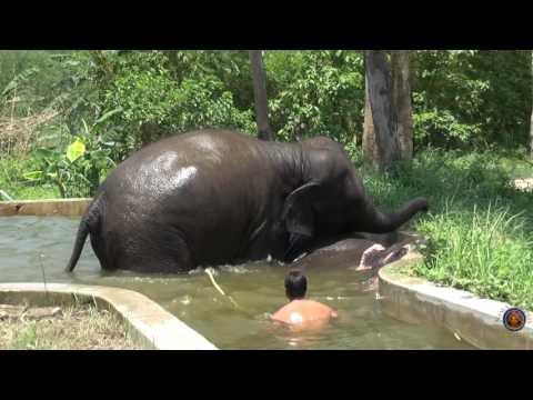 Spend the day with Sri Sri Radha Madhava's Elephants in Sri Dhama Mayapur.