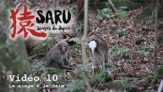 Download Video Saru - vidéo 10 - Le singe et le daim MP3 3GP MP4