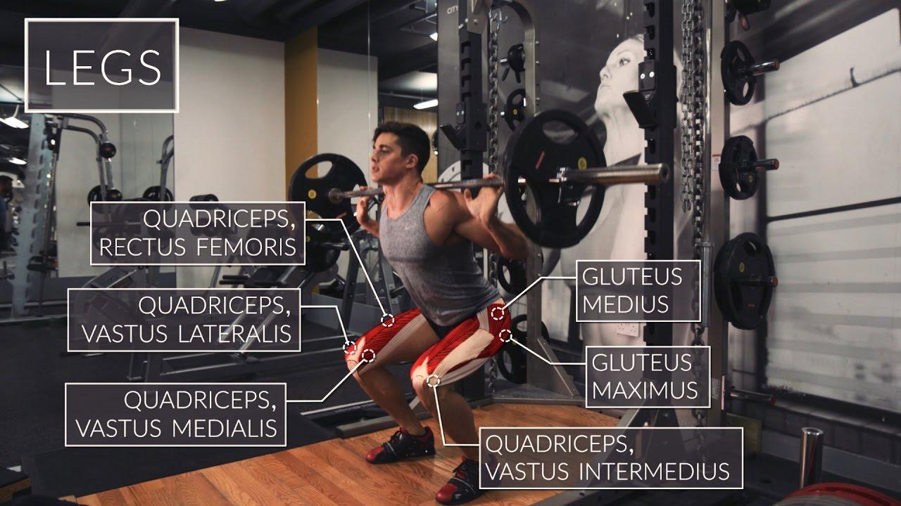 Exercise Anatomy: Legs Workout | Pietro Boselli