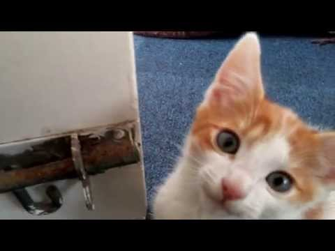 Aww Cute Male Kitten With Blue Eyes - 4K 2160p UHD Ultra HD Video