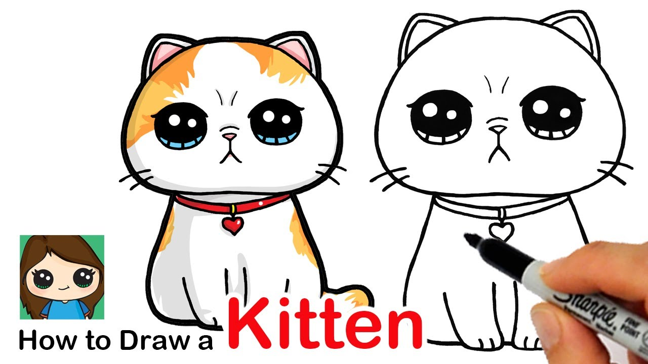How To Draw A Kitten Easy Exotic Shorthair Cat Youtube