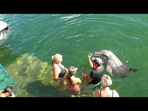 Cuba, swimming with dolphins 2011