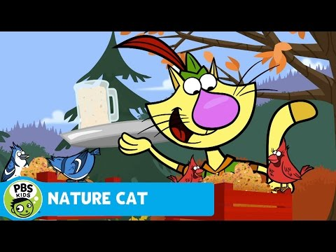 NATURE CAT   Fine Feathered Friends   PBS KIDS