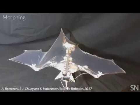 Na-na-na-na-na-na-na-na Bat Bot!   Science News