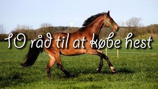 10 råd til at købe hest
