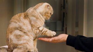 고양이들에게-악수를-가르쳤어요-구독자-이벤트