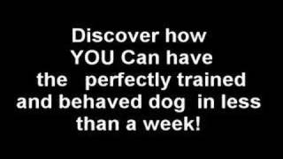 Is Your Dog Humping you?