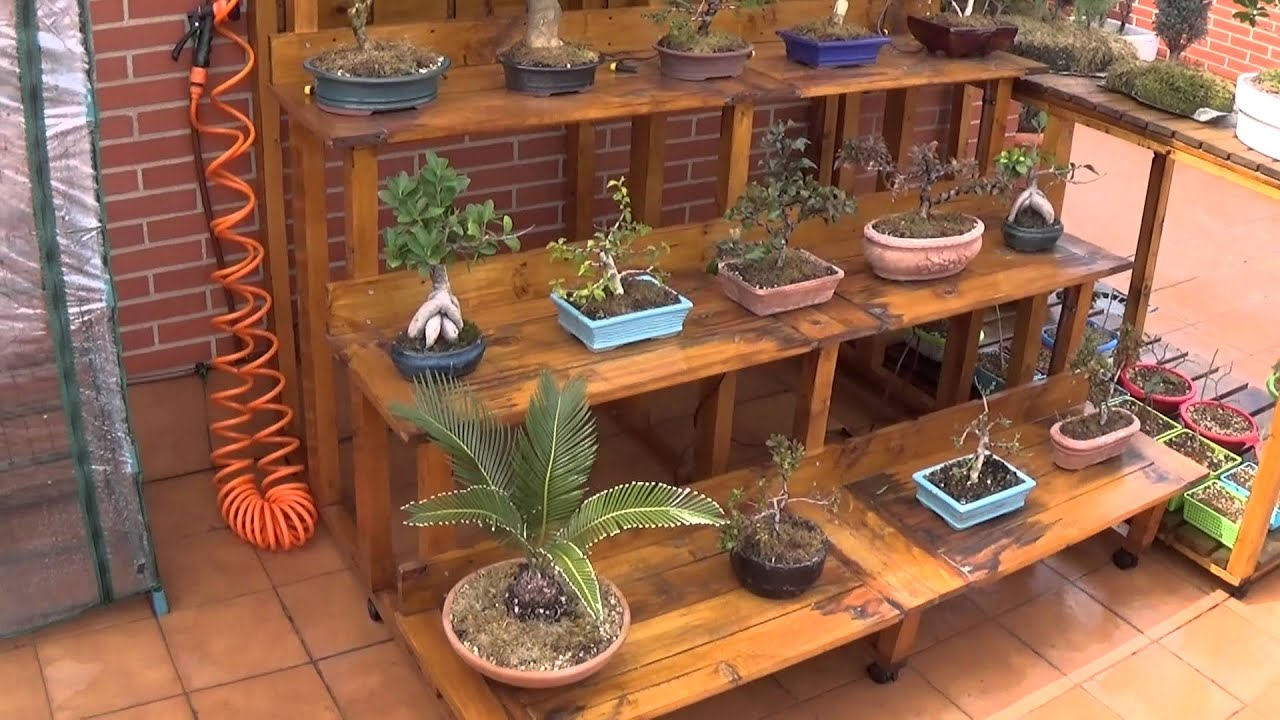 Paseo por la zona de Bonsai 03/2016 - YouTube
